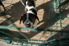 Quatro municípios do Oeste vão receber apoios para centros de recolha oficial de animais de companhia