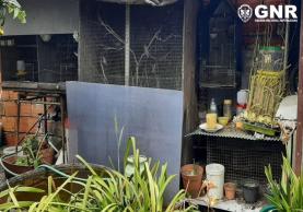 GNR envia aves debilitadas em cativeiro para o Centro de Recuperação de Animais Selvagens do Montejunto