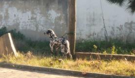 GNR deteve jovem por maus tratos a animal de companhia no concelho de Torres Vedras