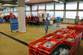 COVID-19: Peixe baixa em valor e quantidade na Lota de Peniche com restaurantes a fechar