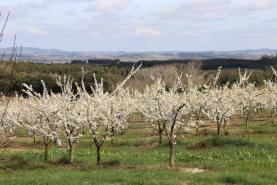 CAP quer postos prioritários de combustíveis para os agricultores em todas as sedes de concelho
