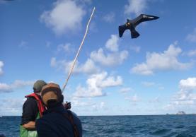 Pescadores de Peniche usam papagaio de papel para evitar captura de aves na redes