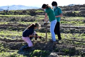 Câmara de Torres Vedras planta mais de 20 mil árvores autóctones em 15 hectares