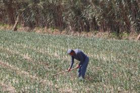 Ministros da Agricultura da UE acordam Política Agrícola Comum
