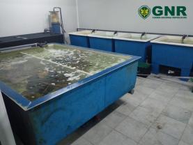 Ribamar: encerramento de estabelecimento de aquicultura ilegal