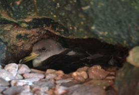 Estudo sobre aves marinhas em risco reforça importância da cooperação internacional