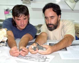 Museu da Lourinhã vai expor o mais antigo crocodilo fóssil conhecido