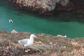 Biólogos concluem que lixo no mar é a principal causa dos ferimentos de aves