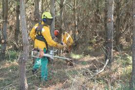 Registada uma centena de casos de incumprimento na limpeza dos terrenos em zonas rurais