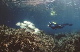Fórum Oceano lança plataforma 'online' para promoção das Estações Náuticas de Portugal