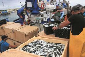 Lota de Peniche foi líder nas vendas de pescado em 2018 segundo a Docapesca