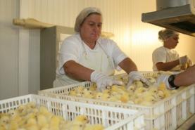 COVID-19: Grupo Valouro aumenta produção de aves em 30% para responder à procura dos supermercados