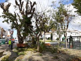 Poda de árvores ornamentais na Praça D. Lourenço Vicente