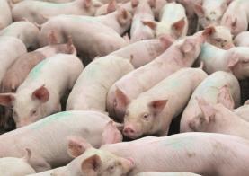 Efectivo pecuário tem que ser registado durante o mês de Dezembro