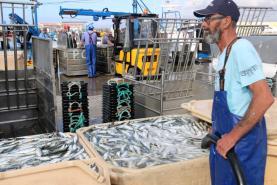 Organizações ibéricas de pesca da sardinha reduzem proposta de quota para 19 mil toneladas